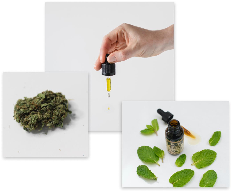 Cannabis/Marijuana/Weed Store & Dispensary in Michigan